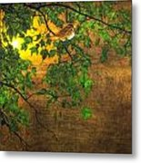 The Little Sparrow In The Tree Metal Print
