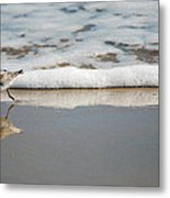 The Lone Sandpiper Metal Print