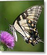 The Love Of Thistle Metal Print