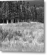 The Meadow Black And White Metal Print