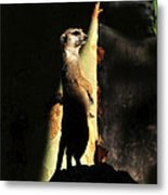 The Meerkats Perch Metal Print