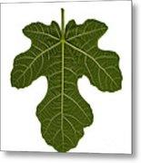 The Mission Fig Leaf Metal Print
