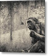 The Monkey And Butterfly Metal Print