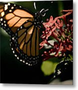 The Morning Monarch Metal Print
