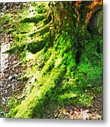The Moss Covered Roots Metal Print