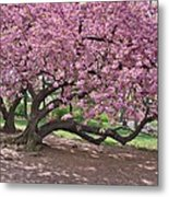 The Most Beautiful Cherry Tree Metal Print