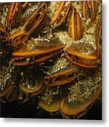 The Mussel Group Metal Print