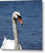 The Mute Swan Metal Print