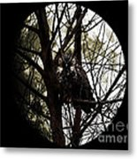 The Night Owl And Harvest Moon 2 Metal Print