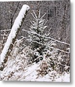 The Old Fence - Snowy Evergreen Metal Print