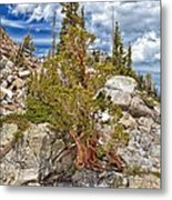 The Old Tree And The Cliff Metal Print