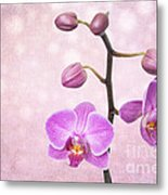 The Orchid Tree - Texture Metal Print