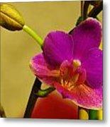 The Original Orchid Metal Print