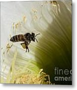 The Overloaded Bee Metal Print