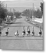 The Owners Of The Road Metal Print
