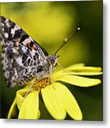 The Painted Lady And The Daisy  Metal Print