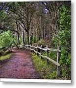 The Path To The Woods Metal Print