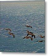 The Pelicans Hunting Metal Print