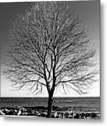 The Perfect Tree Metal Print