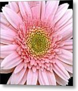 The Pink Flower Metal Print