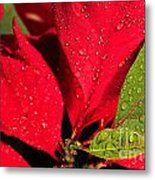 The Poinsettia Metal Print