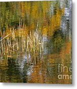 The Pond Shallows Metal Print