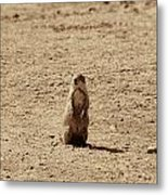 The Prairie Dog Metal Print