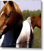 The Prairie Horses Metal Print