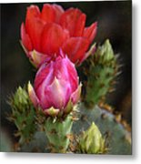 The Prickly Beauty  Metal Print