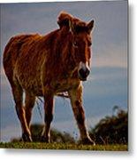The Przewalski Horse Equus Przewalskii Metal Print