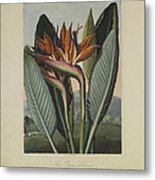 The Queen Flower Metal Print by Robert John Thornton