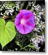 The Queen's Morning Glory Metal Print