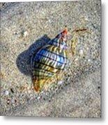 The Rainbow Shell Metal Print