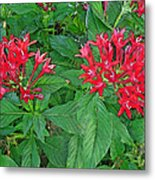 The Red Flowers Metal Print