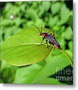 The Rednecked Bug On The Leaf Metal Print