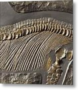 The Ribs And Spine Of Ichthyosaur Metal Print