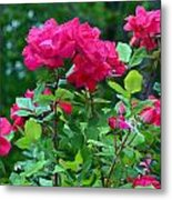 The Rose Garden Metal Print