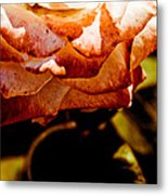 The Rose Metal Print