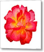 The Rose Patchwork Metal Print