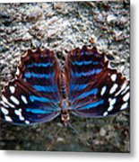 The Royal Blue Butterfly Metal Print
