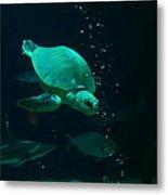 The Sea Turtle Dives Metal Print