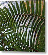 The Shade Of A Fern Metal Print