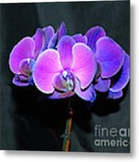 The Shade Of Orchids Metal Print