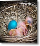 The Shimmering Blue Egg Metal Print