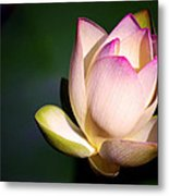 The Silent One Metal Print