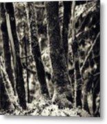 The Silent Woods Metal Print