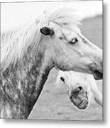 The Smiling Horse Metal Print