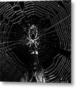 The Spider And The Fly . Black And White Metal Print
