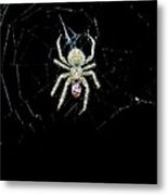 The Spider Metal Print