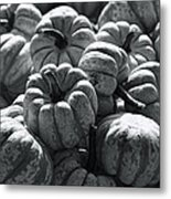 The Squash Harvest In Black And White Metal Print